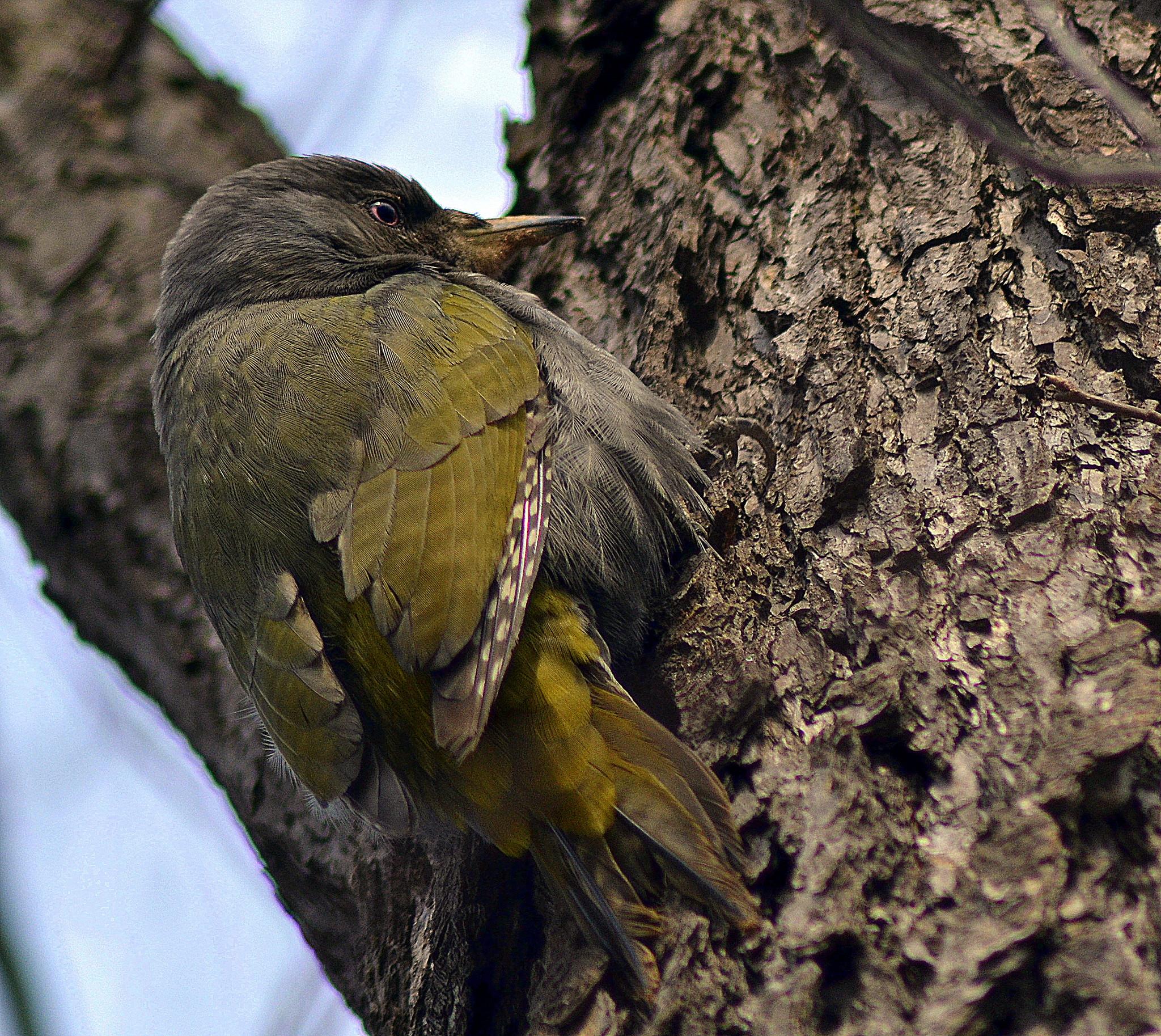организовать фото птиц приморского края полностью